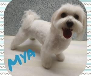 Esta es mya, una maltesa muy jovencita y con mucha energía!
