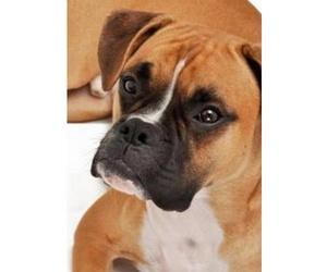 Urgencias veterinarias en Ponferrada | Clínica Veterinaria Europa