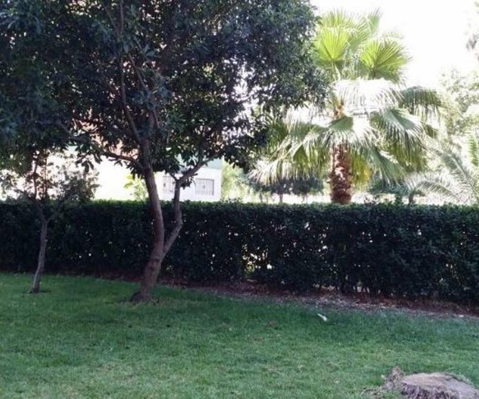 Mantenimiento de jardines, plantas y palmeras