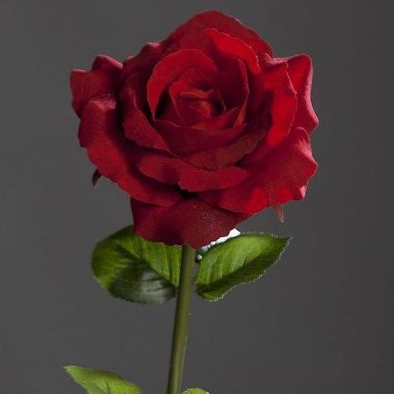 Rosa Terciopelo Roja