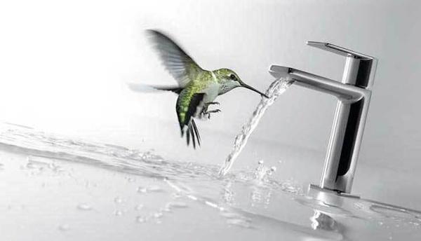 grifo colibrí