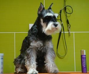 Peluqueŕía canina en San Lucas