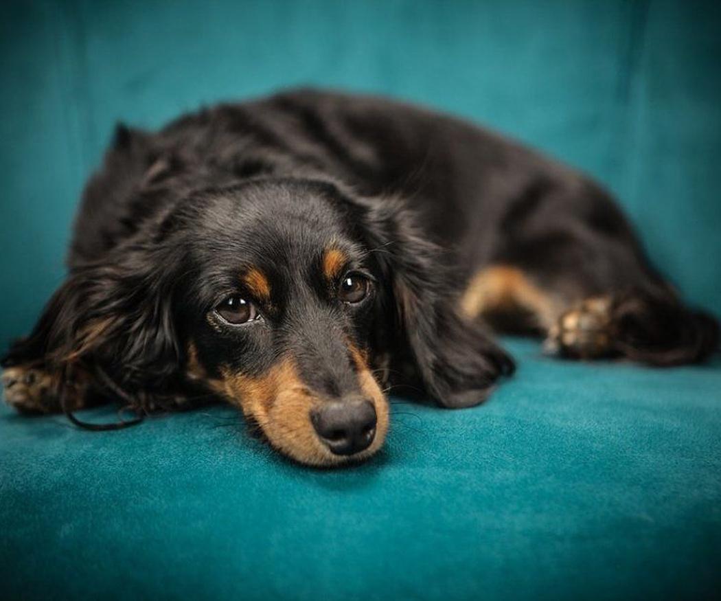 Los problemas que puede sufrir tu perro con las gládulas anales