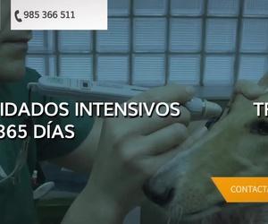 Veterinario exóticos Gijón
