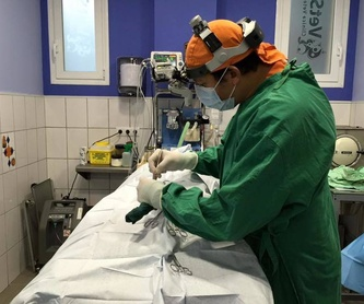 Hospitalización: Servicios de Clínica Veterinaria Vetsur Fuengirola