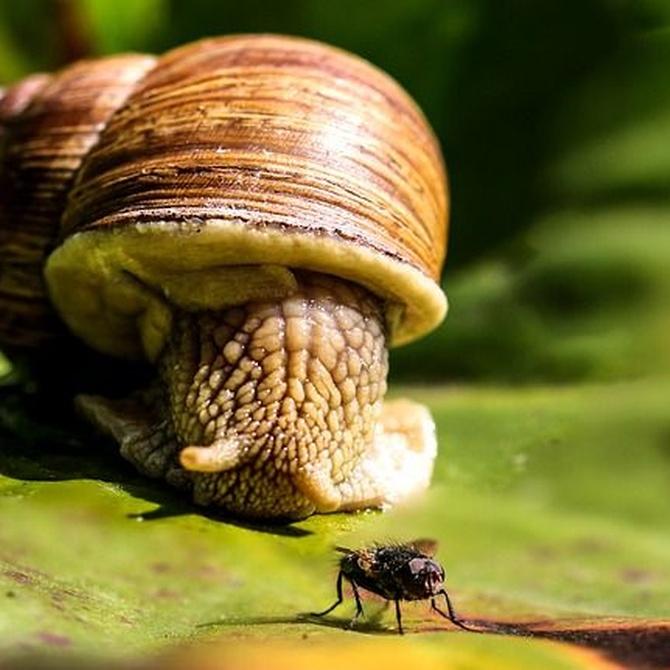 Historia de los caracoles como alimento