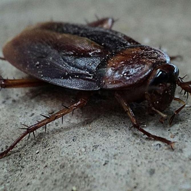 Eliminar las cucarachas de un negocio de hostelería