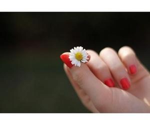 Belleza básica: Estética Tania Pineda