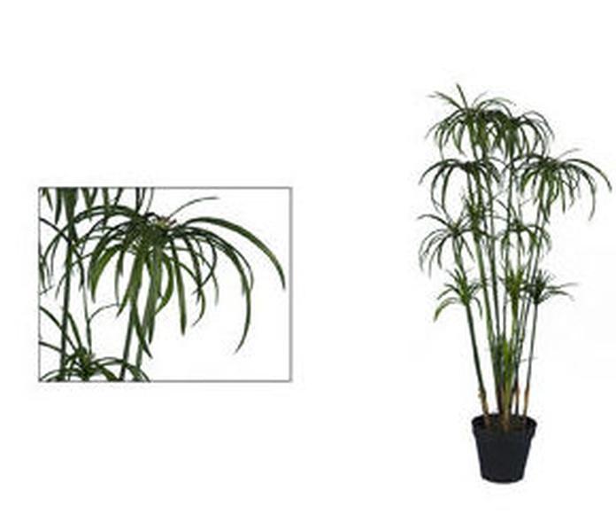 Planta Ciperus Plastic 90cm con maceta