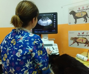 Galería de Veterinarios en Puertito de Güímar | Veterinario El Puertito