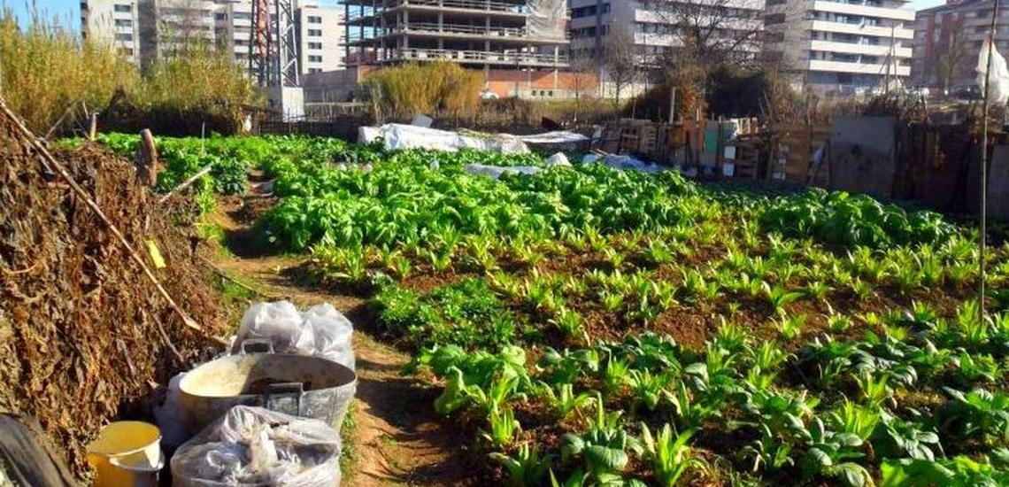Huerto ecologico Madrid