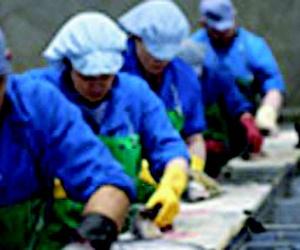 Pescado (mayoristas) en Noia | Whitelink Seafood Limited
