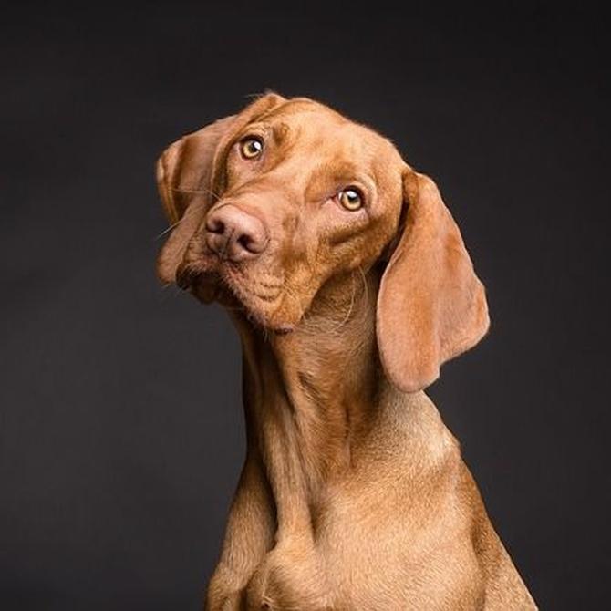 Enfermedades frecuentes de los perros