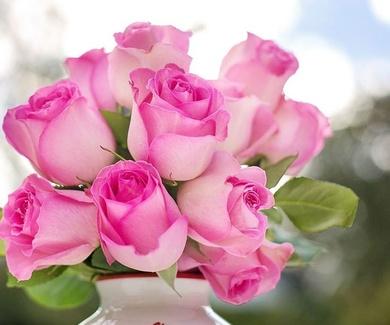 Rosas ofertas