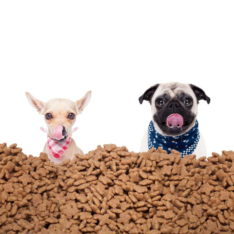 Alimentación: Servicios de Shira Mascotas