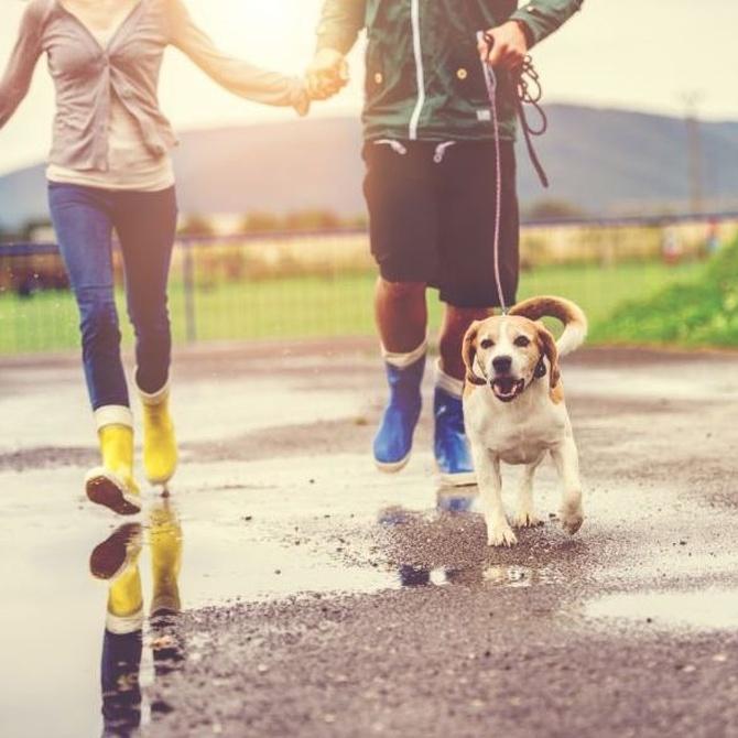 Cuidado de perros bajo la lluvia