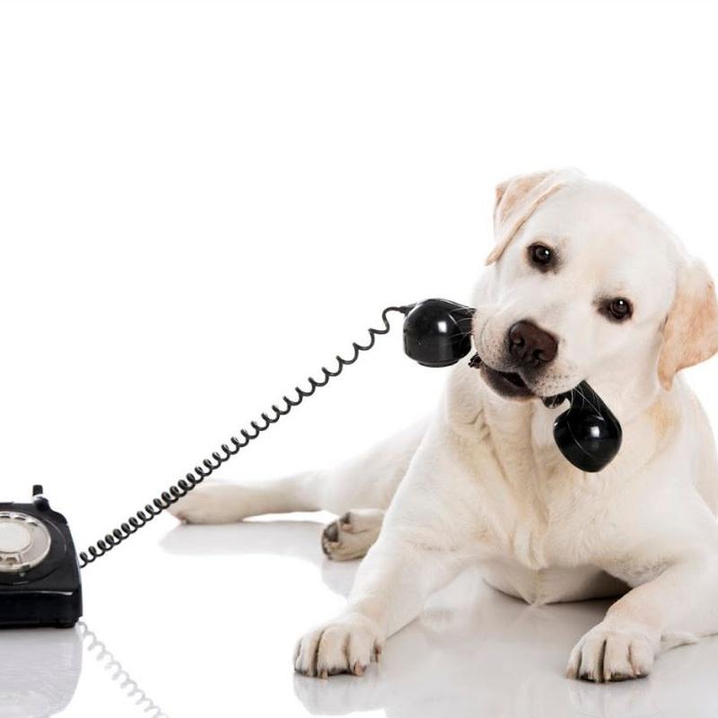 Urgencias 24 horas: Servicios veterinarios de Clínica Veterinaria Dobermann II