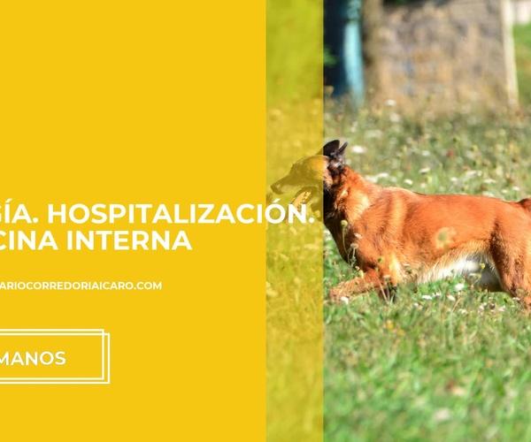 Clinica veterinaria en Oviedo