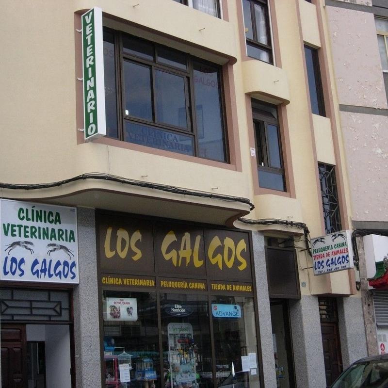Consulta general: Catálogo de Clínica Veterinaria Los Galgos 928 252685 -  Peluquería Los Galgos 928 201156