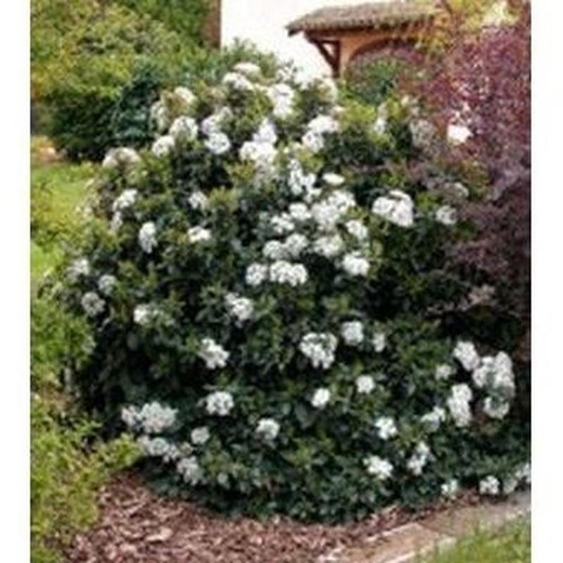 El Durillo: Productos de Danimayos Crea Tu Jardin