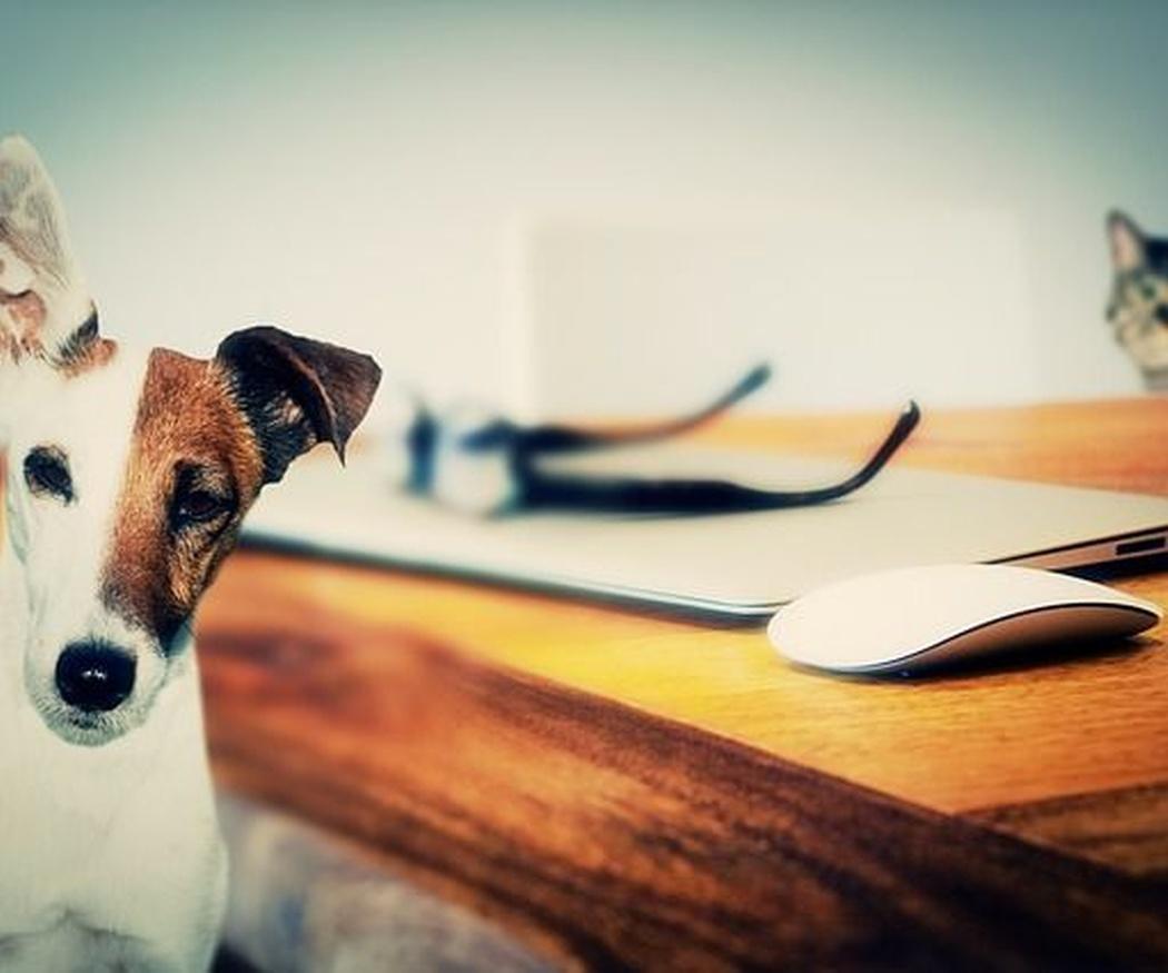 Qué debes saber para viajar con tu mascota