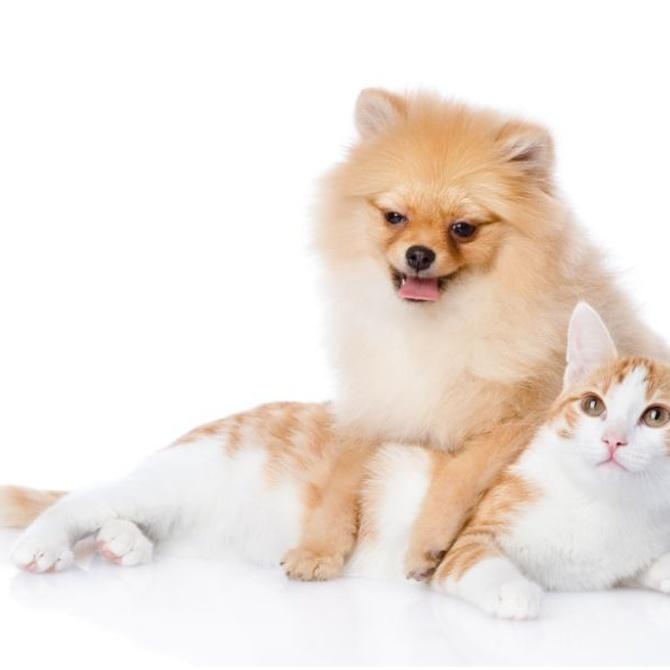 Particularidades de la peluquería canina