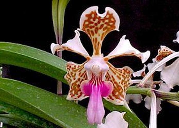 Orquídea Alegría : Terapias de Terapias Alternativas Isabel