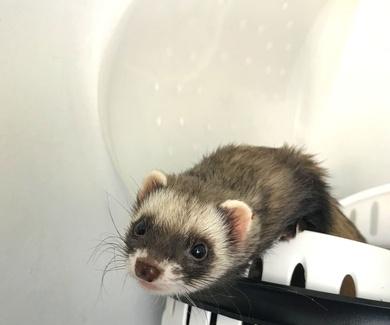 La mejor manera de transportar a tu mascota hasta el veterinario