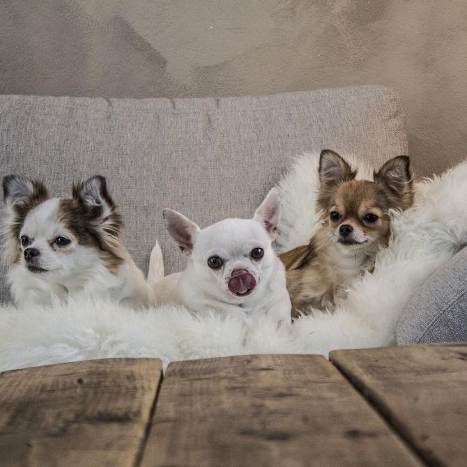 Compartir piso con tu mascota