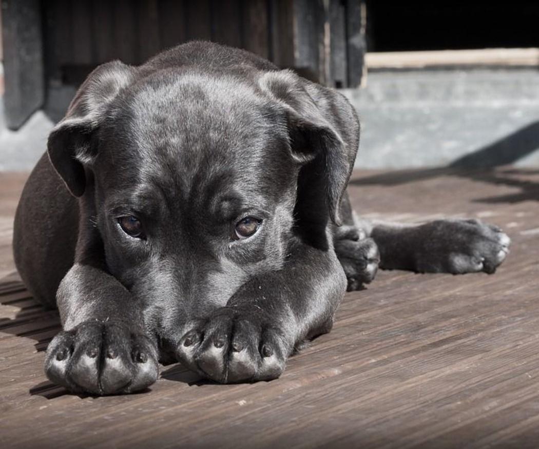 Consejos generales sobre vacunas en perros
