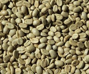 ¿Cuáles son las propiedades del café verde?