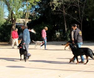 Adiestramiento y Modificación de conductas en perros