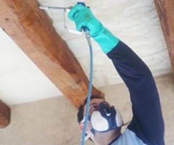 Carcoma: Servicios especializados de Sunet Plagas