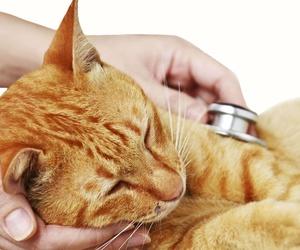 Consulta veterinaria en Almería