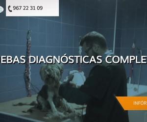 Veterinarios en Albacete | Clínica Veterinaria El Pilar