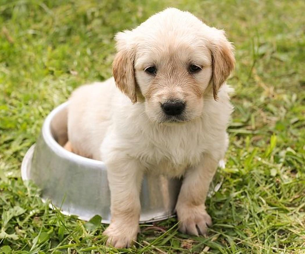 Cómo educar a tu cachorro desde pequeño