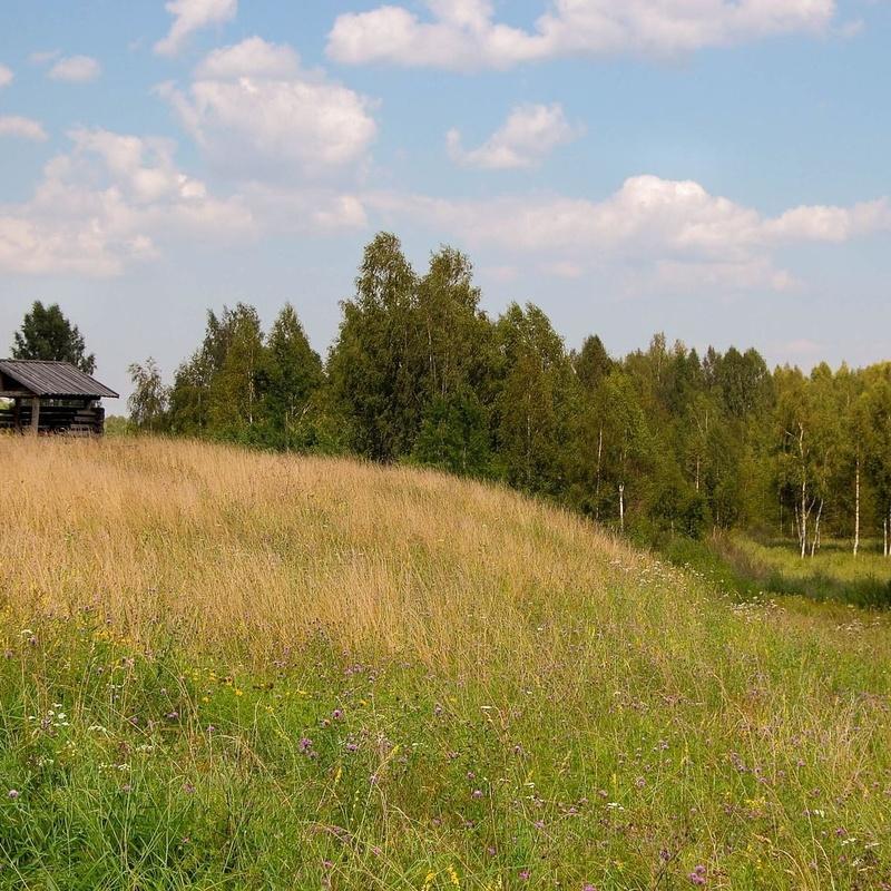 Zonas verdes: ¿Qué hacemos?  de Guardería Canina Estíbaliz