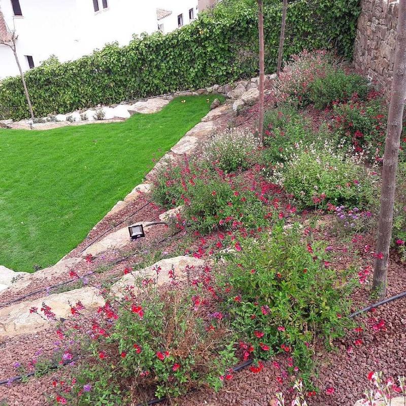 Jardinería: Servicios de Jardines Salvador