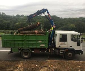 Corte de maderas en Asturias