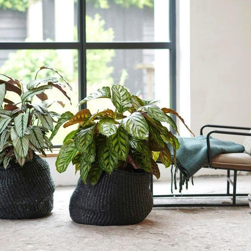 Plantas de interior: Productos y servicios de Eiviss Garden