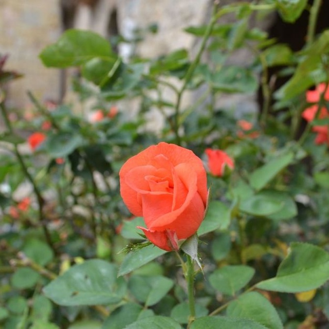 Los aromas en el jardín