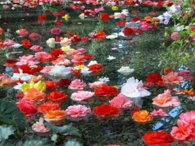 Déjate ayudar por la flores de Bach esta Primavera