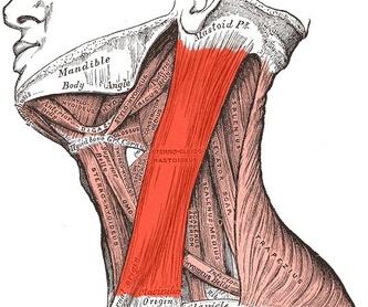 Lifting cervical (cuello): Servicios de Clínica Dr. Javier Cerqueiro Cirugía Plástica