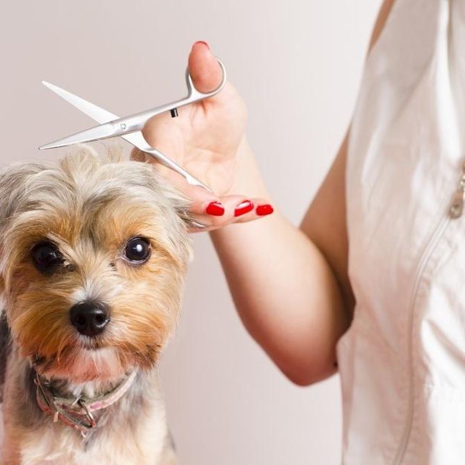 ¿Cada cuánto cortar el pelo a tu perro?