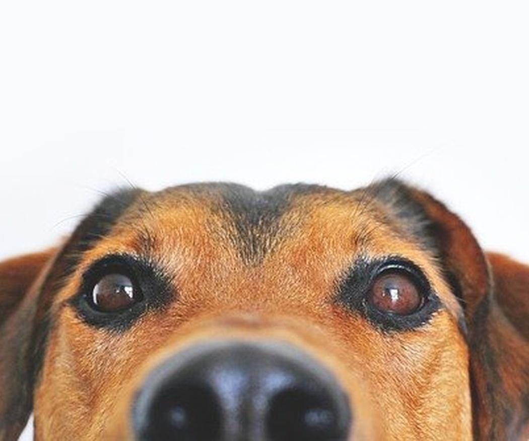 Omega 3 para la salud canina