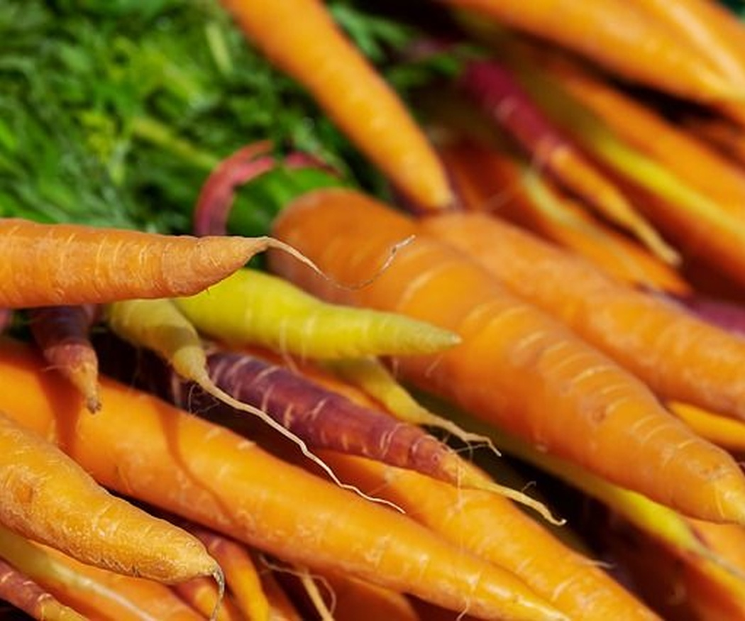 Las zonas de cultivo de las zanahorias