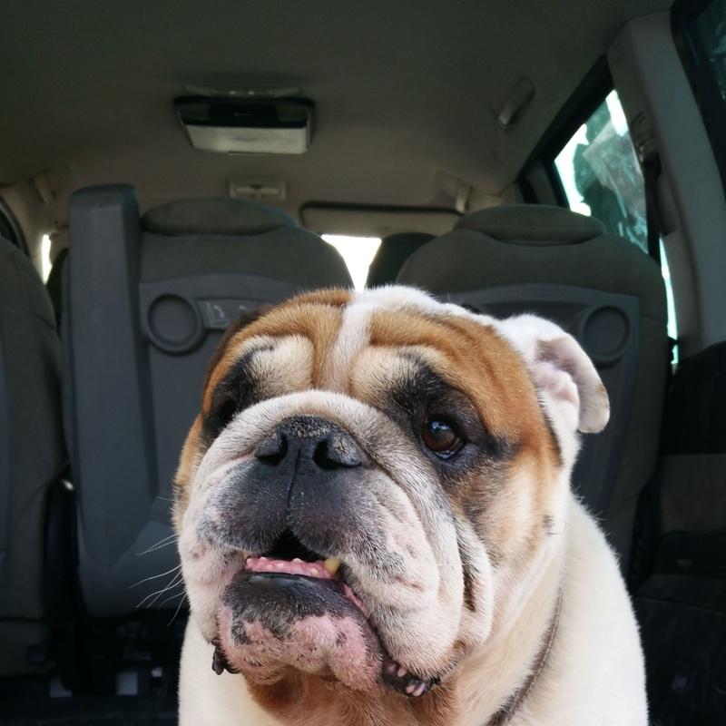 Servicio de recogida y entrega a domicilio: Servicios de Hotel Canino y Felino El Rey de la Casa