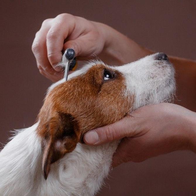 Peluquería canina: no solo es cuestión de belleza