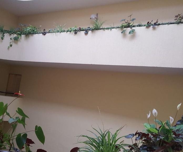 Servicio de jardinería en Sopelana