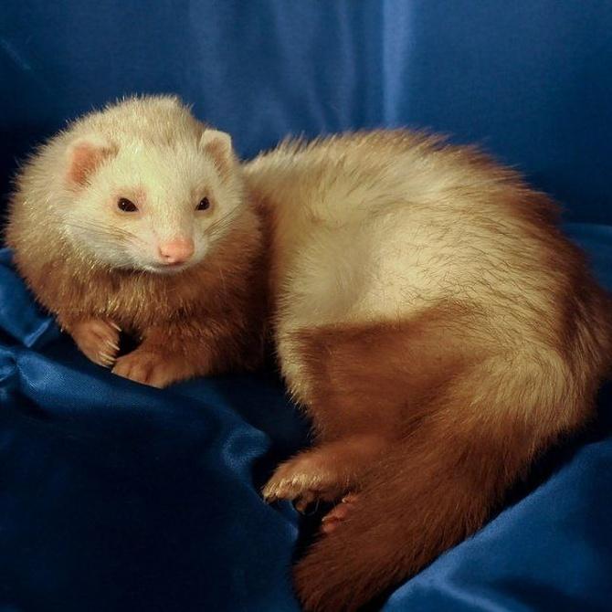 ¿Te atreves a explicar qué es un animal exótico?